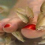 Novedoso tratamiento con peces