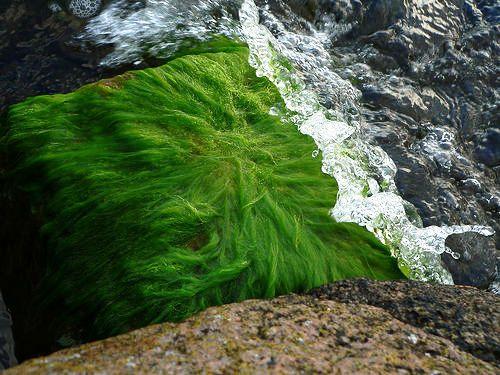 Piel renovada con algas marinas