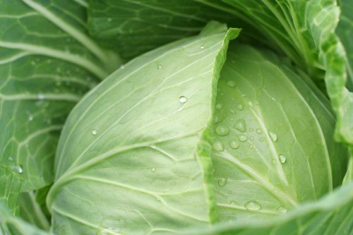 Tratamientos faciales con vegetales – Repollo