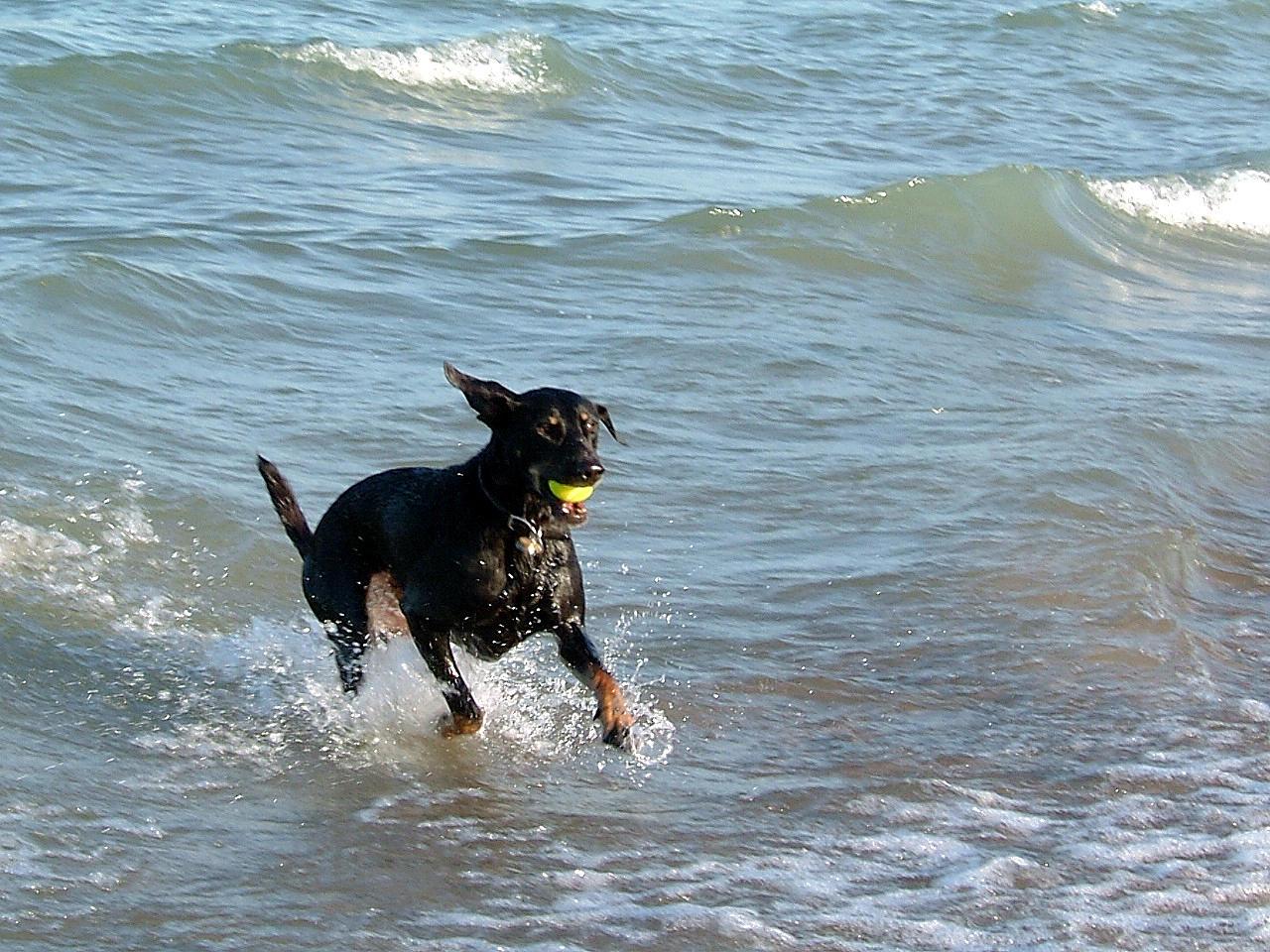 21 playas ideales para llevar su perro en Long Island