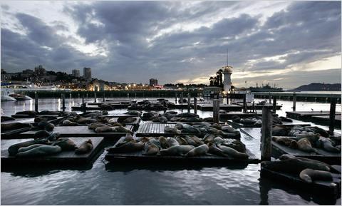 Descubre la vida acuática del Pacífico en San Francisco